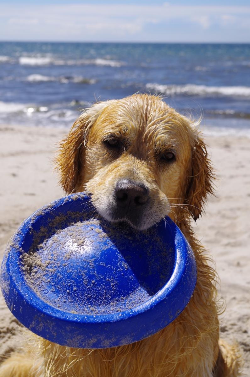 Bornholm mit Hund: Die besten Tipps