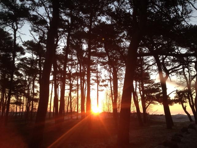 Morgensol.træer